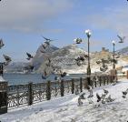 Сезонное жилье в Гурзуфе